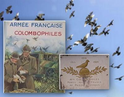 colombophilie-militaire